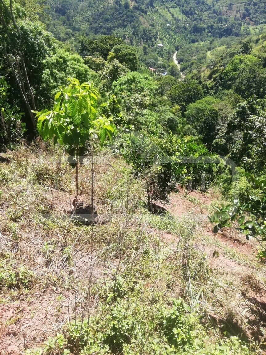 COD 201044   FINCA RIO NEGRO