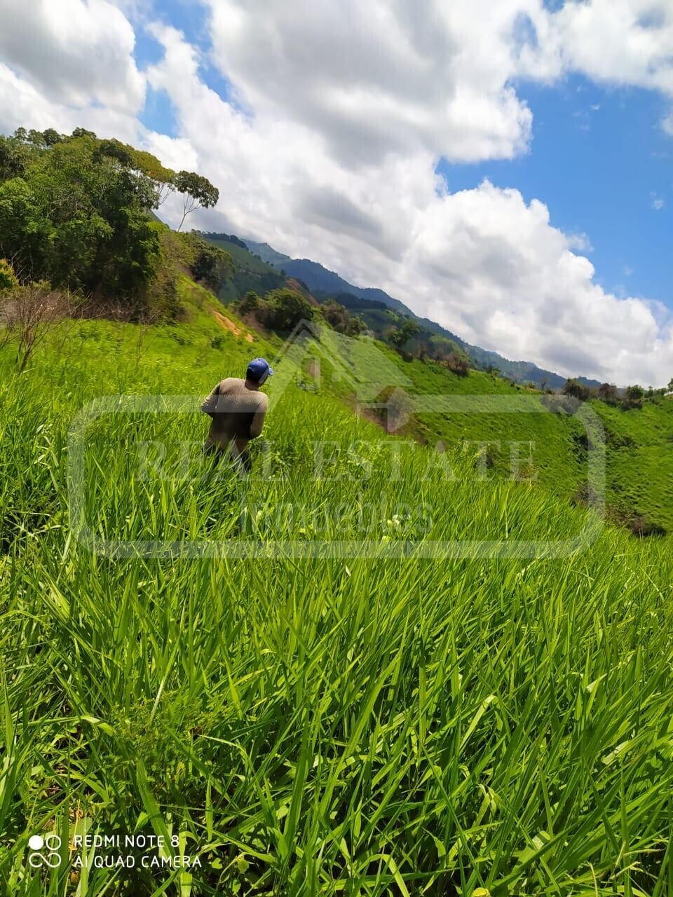 COD 201055   FINCA CUESTA RICA RIO NEGRO